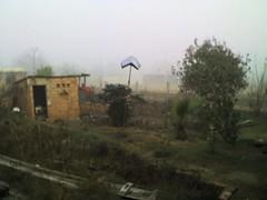Tillo bajo la niebla.