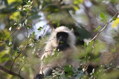 The dirty little monkey
