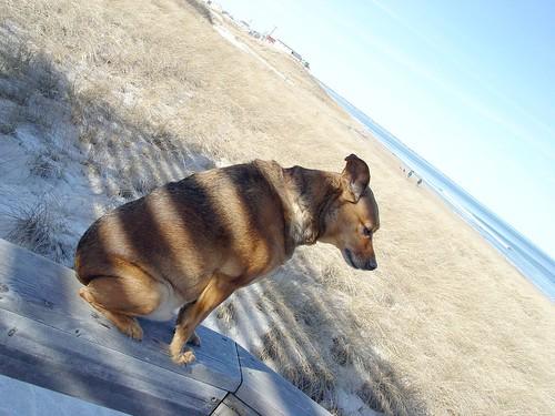 striped Max
