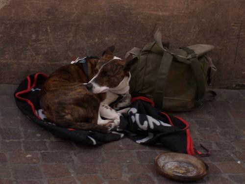 Homeless dog in Freiburg Germany Feb 2007