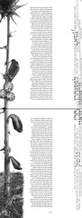 double spread 17-18 (Yaronimus Maximus) Tags: art typography spread book design graphicdesign israel graphic photos double hebrew visual typo  communications maximus visualcommunications  hadassa thomasbernhard theloser yaronimus frankruhl  thedrowner hebrewtypography israelgraphicdesign