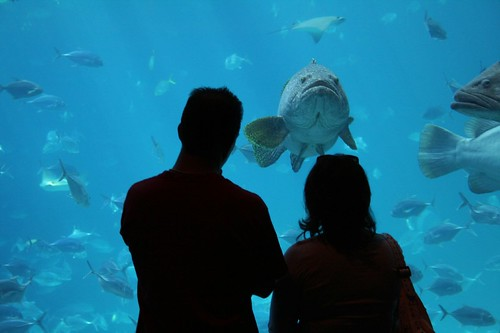 People and Grouper