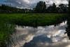 Sky reflected. (Alex-de-Haas) Tags: dutch holland nederland netherlands noordholland zaanseschans clouds gras grass grasslands landscape landschap meadow meadows oerhollands summer sunny weiland weilanden wolken zomer zonnig