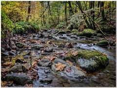 Autumn stream (Hugh Stanton) Tags: rock stream woods forest moss leaf appickoftheweek