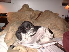 CJ0002 (Jimmy_1962) Tags: nyc mydog