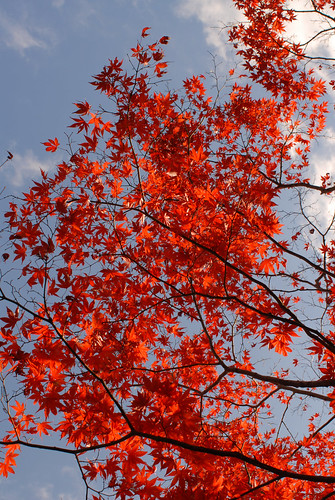leaves turned red