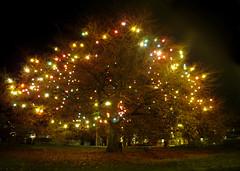 Colour Christmas Tree! (jimmedia) Tags: village
