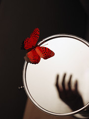 come closer. (solecism) Tags: red reflection butterfly mirror hand utataip12 camilasbutterfly agiftfromrio