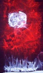 Seeds of Light (Reciprocity) Tags: light red abstract colour film analog 35mm interestingness nikon experimental 21 interestingness1 experiment refraction lensless fujichrome caustics photogram diffraction nikomat nikkormat lightart printscan 64t experimentalphotography cibachrome reciprocity refractograph 512060