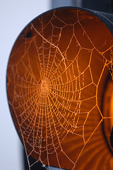 Amber web (Mark Rutter) Tags: orange detail trafficlight amber frost all close web top10 f5 i20 i120 markrutter