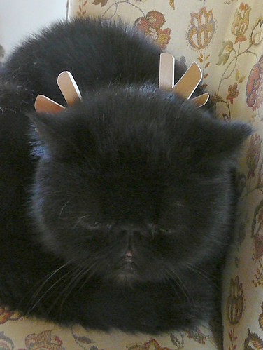 cat_antlers_061223a_onyx