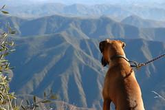 Buddy on Peak 2 (Mad Science) Tags: rescue dog scenery offroad 4x4 buddy boxer 5bestdogs temecula santiagopeak