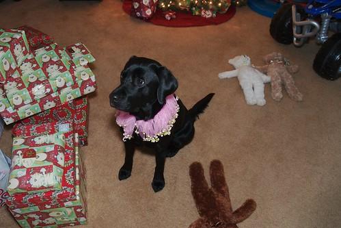 black labrador retriever - christmas