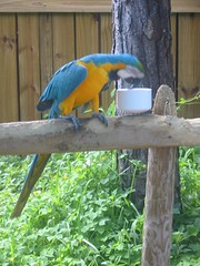 Busch Wildlife Sanctuary (alpertarlene) Tags: bestnaturetnc06