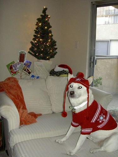Lola_Christmas2006