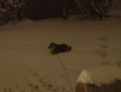 Majc the Snowdog