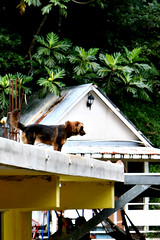 PR dog on roof