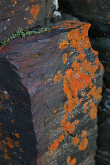 Red Lichen (Circle of Light Photography) Tags: red summer nature rock stone sweden lappland north swedish canyon arctic lapland lichen scandinavia northern scandinavian norrland abisko northernsweden abiskocanyon