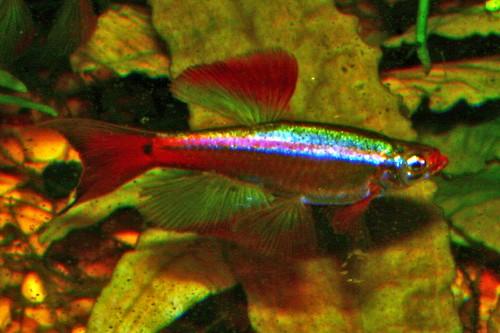 Les Poissons d'Aquarium fabriqués 337364788_fd201c6b89