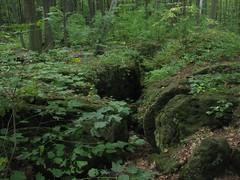 Kelso Hiking Sept 06 158 (travellingzenwolf) Tags: hiking kelso escarpment zenwolf