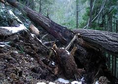 blocked trail - by TroyMason