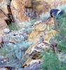 Great Horned Owl (SanJuanJon) Tags: colorado greathornedowl bestnaturetnc06 voguelcanyon