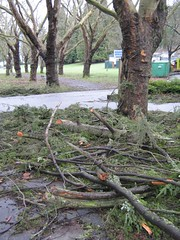 """stanley park mess • <a style=""""font-size:0.8em;"""" href=""""http://www.flickr.com/photos/70272381@N00/343519471/"""" target=""""_blank"""">View on Flickr</a>"""