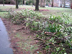 "stanley park mess • <a style=""font-size:0.8em;"" href=""http://www.flickr.com/photos/70272381@N00/343521106/"" target=""_blank"">View on Flickr</a>"