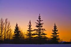 Trees against the sunset (Katpix) Tags: trees winter sunset silhouette interestingness3 katpix kmo i500 specnature mywinners aplusphoto