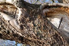 hollow branch (sendepause @ vanderlaan.fotografeert) Tags: holland detail netherlands branch drenthe oneofmybest d80 sigma1850mmf28exdcmacro sluitertijdfotografie