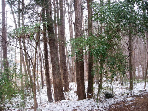 Snow in Raleigh!