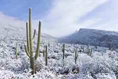 Snow in Sabino Canyon, Tucson, Arizona