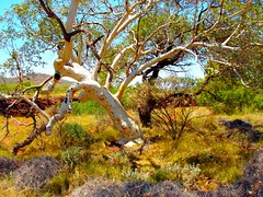 Outback colours (Uhlenhorst) Tags: travel trees landscapes reisen australia 2006 australien landschaften colorphotoaward