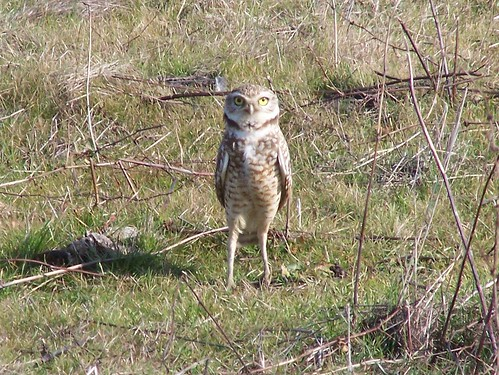 20070203 Owl