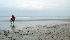 (Magali Deval) Tags: sea 15fav horse mer france reflection beach cheval brittany bretagne breizh reflet plage wsr