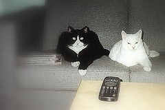 Fritz & Laban watching TV