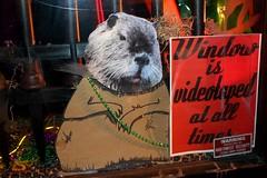 groundhog voyeur?
