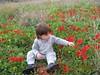 ירדן בשדה כלניות ליד ניר עם (den den) Tags: ירדן בשדה windflowers כלניות poppiesfield
