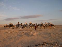 polish tourists in southern tunisia. (elmina) Tags: tunisia polish tunisie camelriding