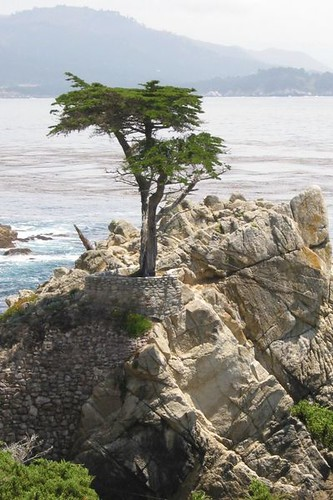 399px-Lone_cypress_in_17-mile-drive