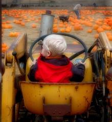 Big Yellow Tractor (gcquinn) Tags: orange usa tractor cute halloween field yellow pumpkin living sweet farm geoff or marin country pumpkins carving quinn treat trick geoffrey holliday dictionary malt greatpumpkin toehead mywinners abigfave spiritofhalloween travelerphotos megashot