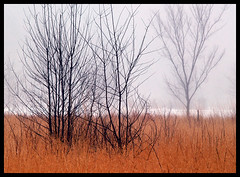 veld (dbthayer) Tags: trees winter ohio snow grass fog landscape meadow swamp marais 樹木