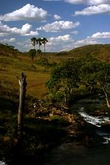 Cachoeira do Indaiá / Indaiá Waterfall (Leonardo F. Freitas (LeoFFreitas)) Tags: nature water rio brasil river waterfall cerrado savannah cachoeira goiás rocha savana corredeira buritizal cachoeiradoindaiá municípiodeformosa