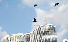 Heroic Trio (fotoJENica) Tags: sky birds three fly flying construction nikon florida miami tropical tres trio jennyromney