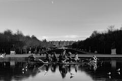 Fin de journée sur le château (Meculda) Tags: versailles france château glace eau fontaine oiseau monochrome extérieur paysage