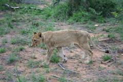 DPP_0021 (skiptontom) Tags: africa tandatula