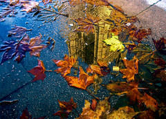 Parliament in a puddle (kimbar/Thanks for 2.5 million views!) Tags: autumn england london beautiful leaves reflections puddle cool perfect parliament 337 kiss2 kiss3 i500 kiss1 kiss4 kiss5