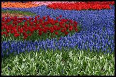 This is why people crowd the Keukenhof (Dit is Suzanne) Tags: 04052006 nederland netherlands нидерланды zuidholland lisse keukenhof bloemen flowers цветы lente spring весна rood red красныйцвет blauw blue groen green зеленыйцвет oranje orange оранжевыйцвет roze pink розовыйцвет abigfave ©ditissuzanne голубойцвет canondigitalrebel views1400