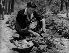 Mrs. George McLelland picking greens (John Collier Jr.) Tags: blackandwhite bw usa history classic film museum america vintage collier us photographer unitedstates propaganda wwii farming documentary patriotic roosevelt historic professional worldwarii 1940s archives maxwell ww2 americana civildefense patriotism archival forties largeformat anthropology homefront worldwar2 40s fsa wartime newdeal owi waryears officeofwarinformation johncollierjr farmsecurityassociation
