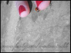 joaninha x]~ (madame_cihh) Tags: cutout joaninha joana